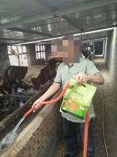 绵羊小羔羊催肥饲料给羊催肥的最好方法图片