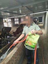 牛羊催肥旺长素肉牛育肥饲料配方