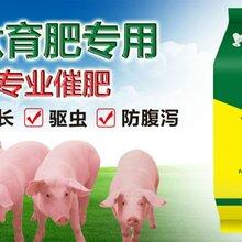 猪催肥添加剂哪种好猪催肥用什么添加剂好图片