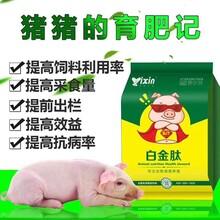 育肥猪专用白金肽好吗猪催肥产品供应图片