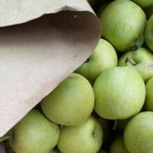 宿州最大的皇冠梨产地砀山县皇冠梨产地多少钱一斤