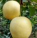 皇冠梨产地秒下单品味安徽砀山皇冠梨绿色健康