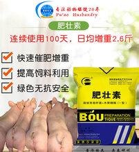 猪催肥产品猪催肥最简单方法提早出栏