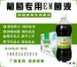 利用em菌液种植葡萄产量高品质高