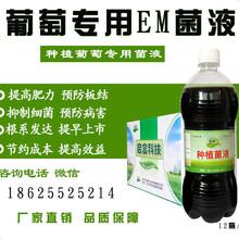 种植菌液直接喷洒葡萄叶面的em菌液哪里有卖的