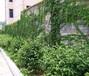 哈尔滨南岗区三叶草经贸有限公司,针对绿植租摆,花卉租,鲜花出售,盆栽租售