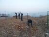 青岛护栏网青岛小区围栏网青岛绿色围栏网