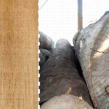 非洲菠萝格一级材料刚果南非进口原材防腐木加工图片
