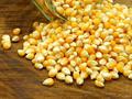 新疆粮油交易所:11.15饲企渐有建库意向,玉米价格上调几率高图片