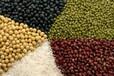 新疆新粮粮油:11.21张爱国局长亲自调研粮食工作