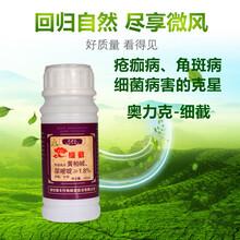 西瓜角斑病特效药细截杀菌剂厂家批发西瓜专用