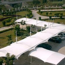专业批发环保张拉膜公园PVDF膜结构停车遮阳棚钢结构自行车棚