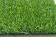 人造草坪专业生产厂家,T8系列