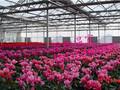 温室大棚选择万红,高品质的服务质量图片