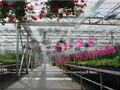 温室大棚蔬菜种植技术/花卉温室大棚/反季蔬菜种植图片