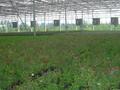 青州万红温室园艺工程有限公司温室大棚建设设计企划书图片