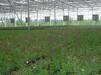 青州万红温室园艺工程有限公司温室大棚建设设计企划书