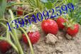大量供应滴灌设备草莓滴灌带膜下滴灌各种规格滴灌管批发