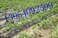 低价销售大田果园大棚用迷宫式滴灌带规格齐全农用迷宫式滴灌