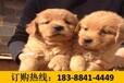 贵州遵义绥阳宠物交易市场买有血统证边境牧羊犬