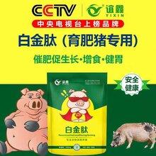 豬吃什么長得快,日長三斤就用育肥豬專用白金肽,讓豬提前出欄圖片