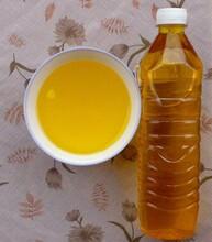 江西茶油低价出售家用好油农家自采自销