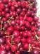 進口智利車厘子批發一手貨源水果商超專供櫻桃