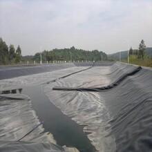 广安鱼塘防渗膜生产厂东森游戏主管量大优惠图片