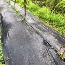 园林防草布、白山防草布、正瑞塑业(查看)图片