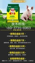 育肥猪饲料添加剂猪吃什么长得快