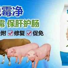 进口脱霉剂效果好吗?猪用的脱霉剂价格是多少图片