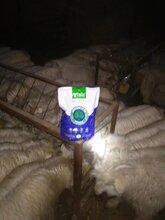 牛羊催肥肽牛预混料图片