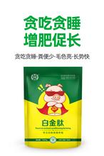 育肥猪催肥饲料添加剂猪长势快选用好产品肥猪催肥剂图片