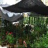 大棚蔬菜遮阳网