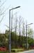 河北路灯杆厂家供应海螺碧路灯杆,品质路灯杆