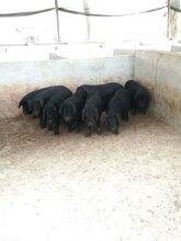 养殖竹鼠,豪猪能不能赚钱