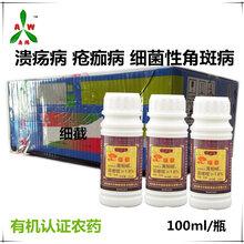 内蒙古赤峰番茄溃疡病西红柿溃疡病用的特效药是奥丰靓果安和细截
