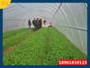蔬菜大棚造价蔬菜大棚大棚骨架无锡顺合温室工程有限公司