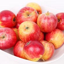 大量供用海棠果酸甜孕妇水果5斤包邮图片