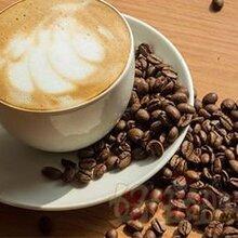 上海咖啡豆报关