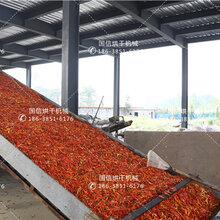 网带式辣椒烘干机-辣椒烘干设备厂家图片