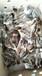 珍珠苗包发货送养殖技术资料