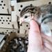 亳州珍珠鸡种苗价格,池州珍珠鸡种苗价格