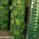 安平臨邊生產山體綠葉網礦山綠化偽裝網綠葉掛山網綠葉網