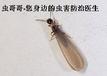 深圳灭白蚁杀白蚁免费上门检测福田灭白蚁龙岗灭白蚁