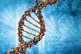 叶酸能力在线检测-基因检测