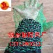 厂家销售2针建筑工地防尘网盖土防尘网防尘网现货