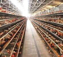 雞飼料添加劑價格,微生態飼料添加劑圖片