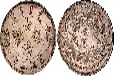 大清银币宣统三年曲须龙版价格多少钱?