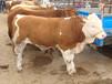 肉牛催肥用什么增肥快?增强消化,促吸收试试优农康微生态饲料添加剂